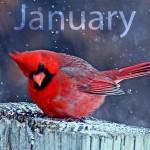 Jan_Cardinal